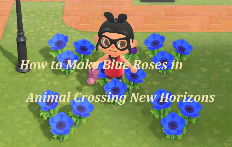 make blue roses in animal crossing
