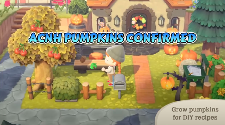 ACNH confirmed pumpkins